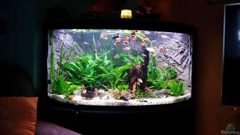 aquarium fluval venezia 350 eckaquarium aus fluval venezia 350 eckaquarium von steffen und felix. Black Bedroom Furniture Sets. Home Design Ideas