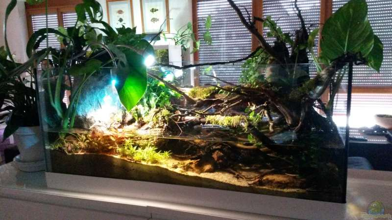 Aquarium Hauptansicht von Low tech Riparium