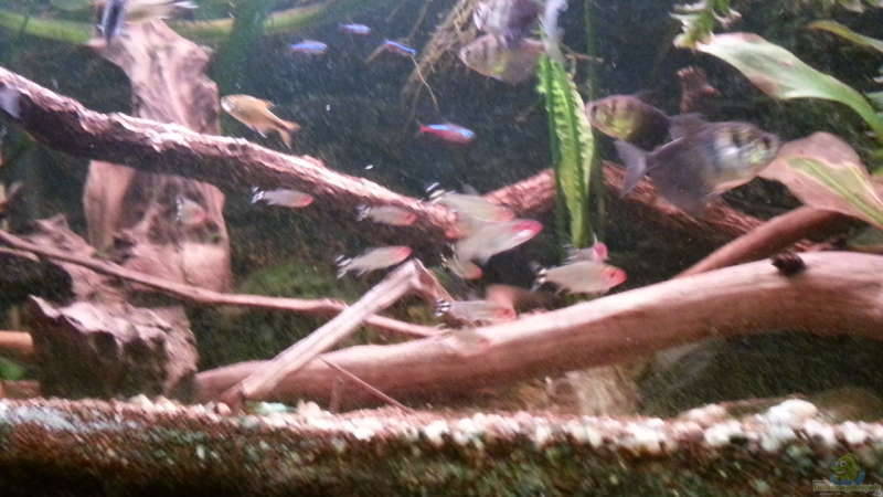 Dekotation im Aquarium Green Amazonas