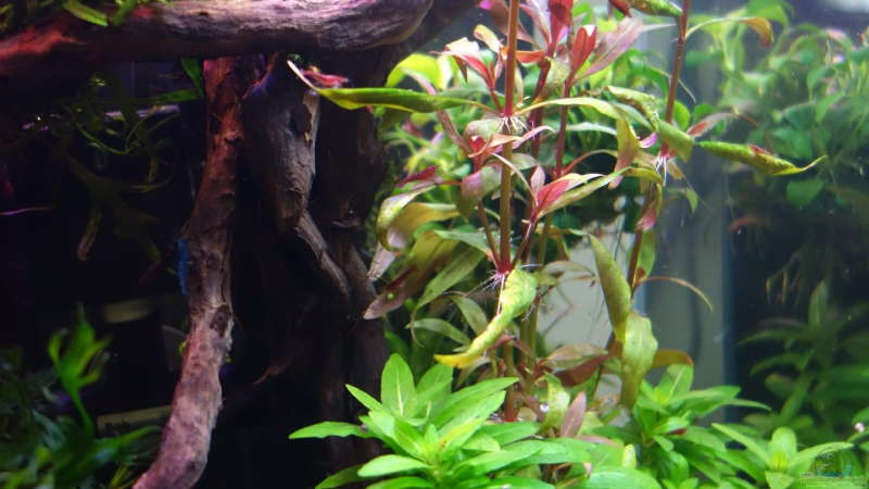 Aquarium Hauptansicht von Magic Aquascaping