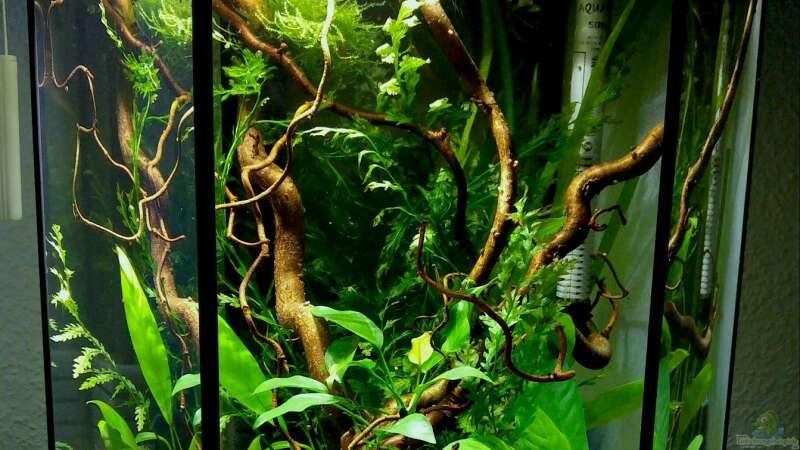 aquarium hauptansicht von westafrikabecken mit leuchaugenfischen aus 6 eck westafrikabecken von. Black Bedroom Furniture Sets. Home Design Ideas