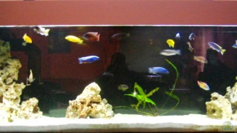 aquarium von andre herzog becken 3703. Black Bedroom Furniture Sets. Home Design Ideas