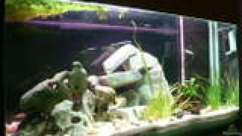 aquarium von eva weixler becken 465. Black Bedroom Furniture Sets. Home Design Ideas
