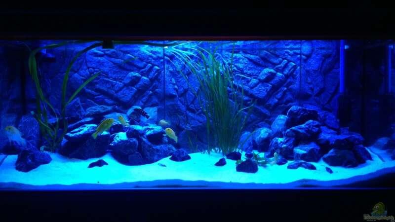 aquarium von ray 5259 billy 39 s t mpel. Black Bedroom Furniture Sets. Home Design Ideas
