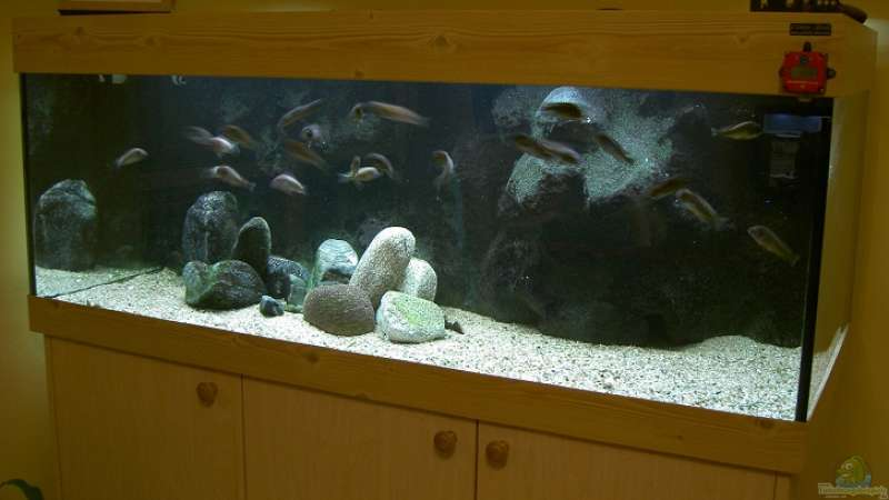 My biotope tank - Tanganyika (TROPHS) from North