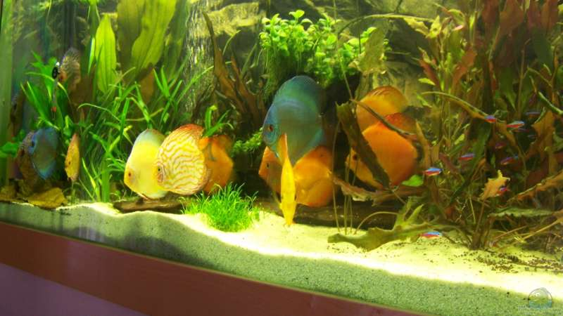 Aquarium von silke 7705 lebendiges bild - Aquarium in der wand ...