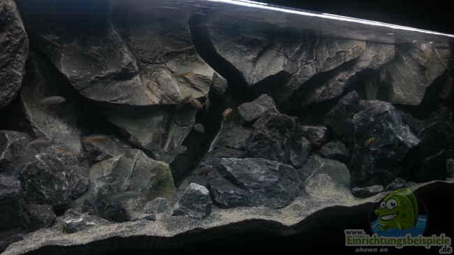Aquarium klein einsteiger for Aquarium einsteiger