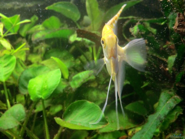 Seite von morten aquarium einrichtungsbeispiele for Zierfische hannover