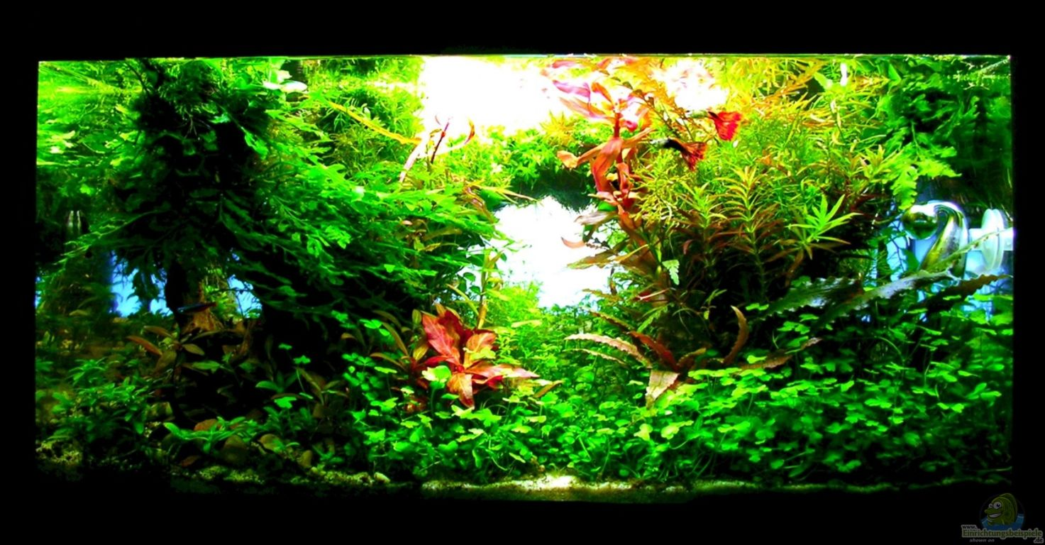 1000+ images about Aquarium on Pinterest Aquascaping and Ph