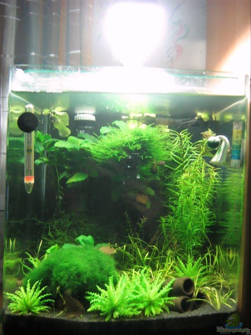 aquarium von aquarium bochum 10039 nano cube. Black Bedroom Furniture Sets. Home Design Ideas