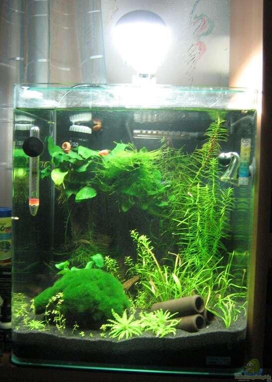 aquarium von aquarium bochum nano cube. Black Bedroom Furniture Sets. Home Design Ideas