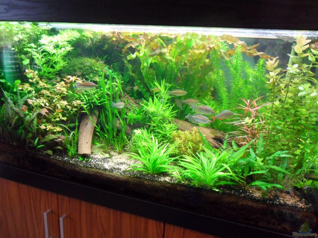 einrichtungsbeispiele mit wurzeln und holz im aquarium. Black Bedroom Furniture Sets. Home Design Ideas