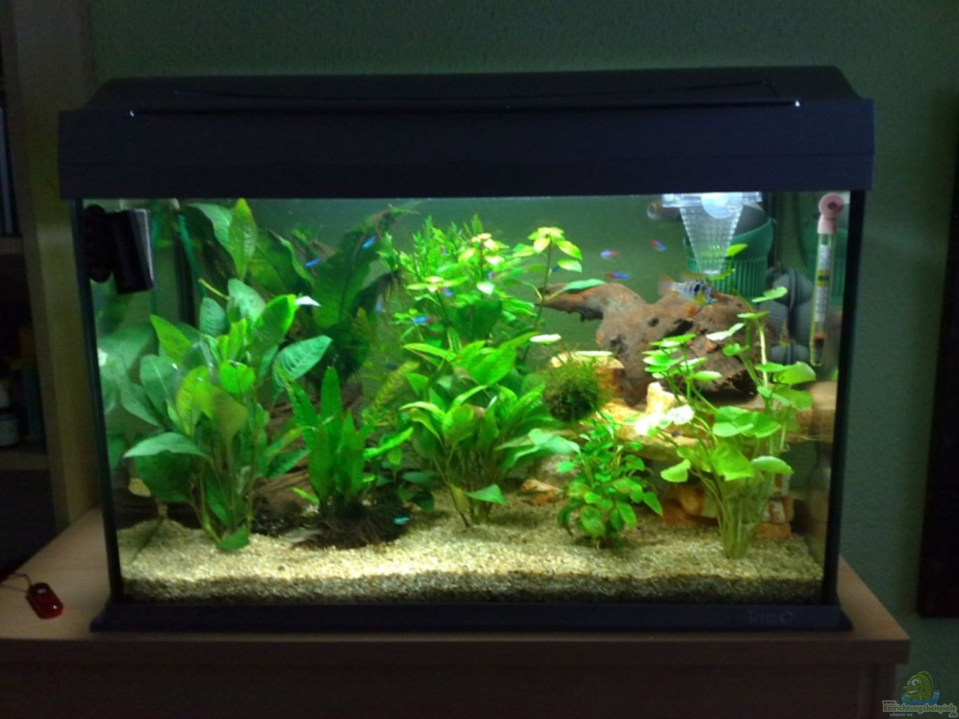 Example no 10258 from the category mixed america tanks for Decoration aquarium 60 litres