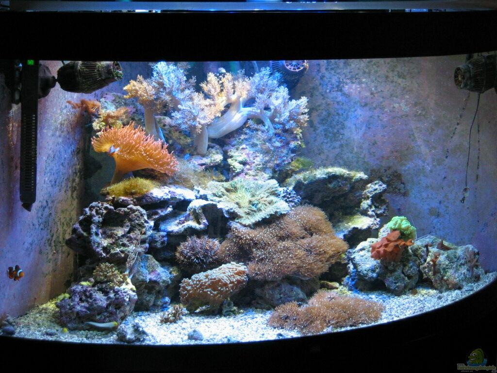 aquarium hauptansicht von trigon 350 abl sung durch deltec becken aus trigon 350 abl sung. Black Bedroom Furniture Sets. Home Design Ideas