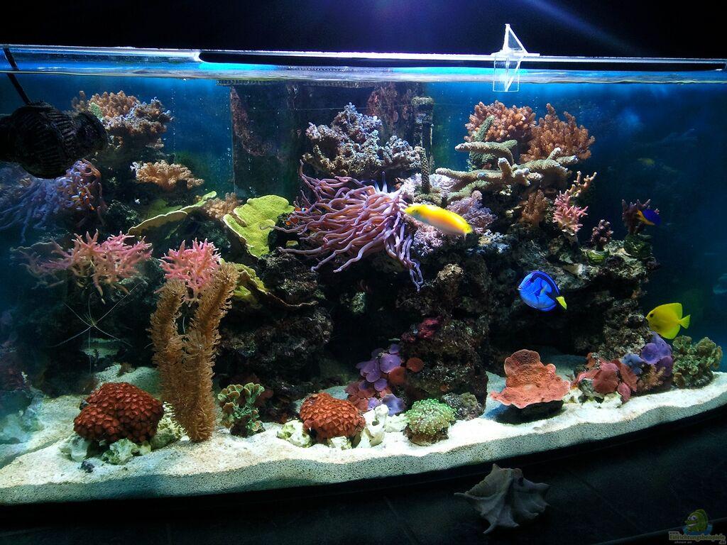 aquarium von dirk sch fer becken 10342. Black Bedroom Furniture Sets. Home Design Ideas