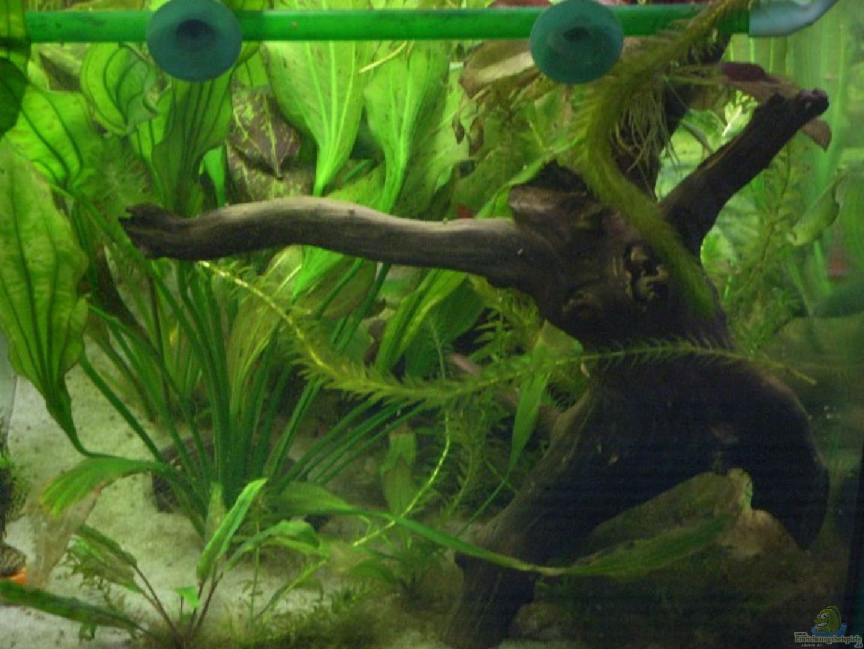 aquarium von matthias becken 10367. Black Bedroom Furniture Sets. Home Design Ideas