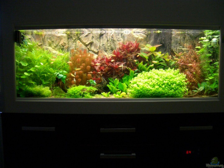 aquarium von marcel simon becken 10440. Black Bedroom Furniture Sets. Home Design Ideas
