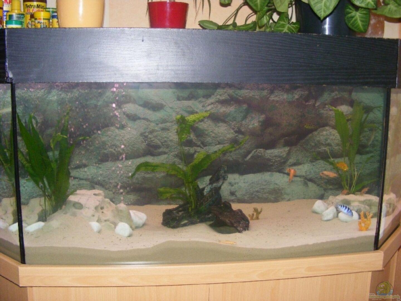 aquarium von malaw k d becken 10495. Black Bedroom Furniture Sets. Home Design Ideas