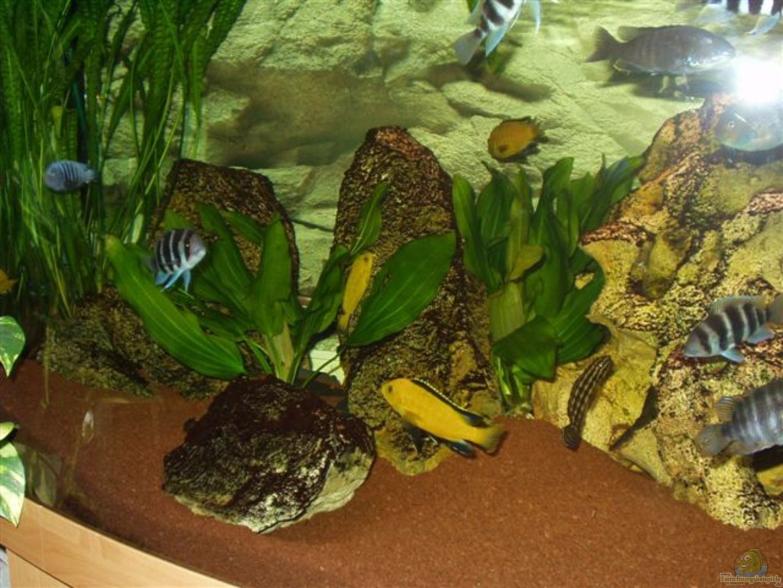 aquarium von david daniel becken 106. Black Bedroom Furniture Sets. Home Design Ideas
