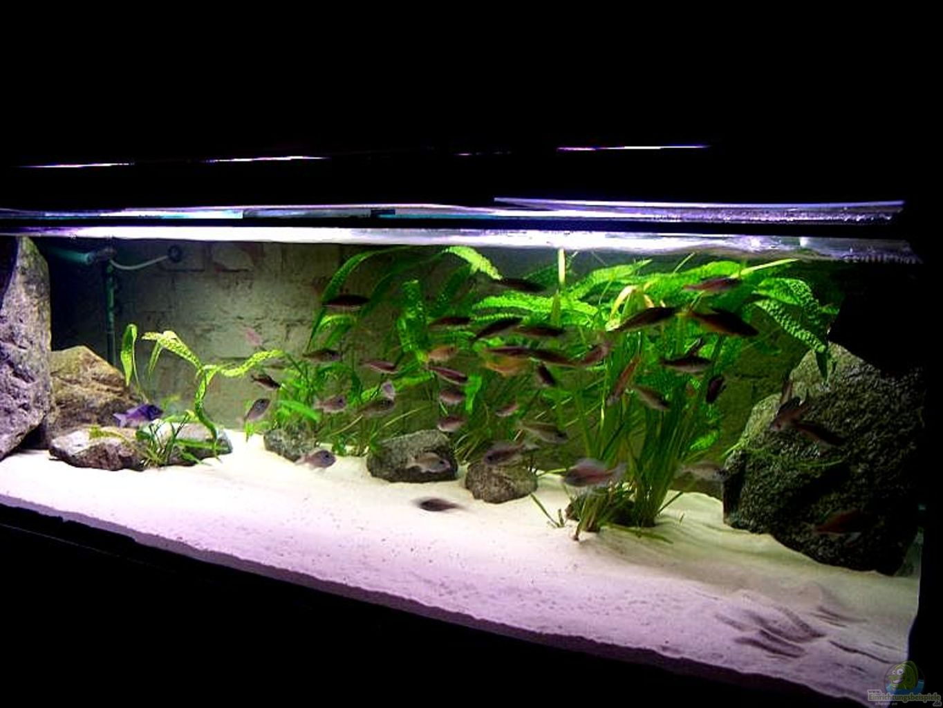 aquarium von maik83 760 liter tanganjika. Black Bedroom Furniture Sets. Home Design Ideas