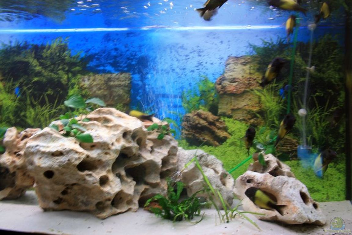 aquarium von turgut sen becken 10726. Black Bedroom Furniture Sets. Home Design Ideas