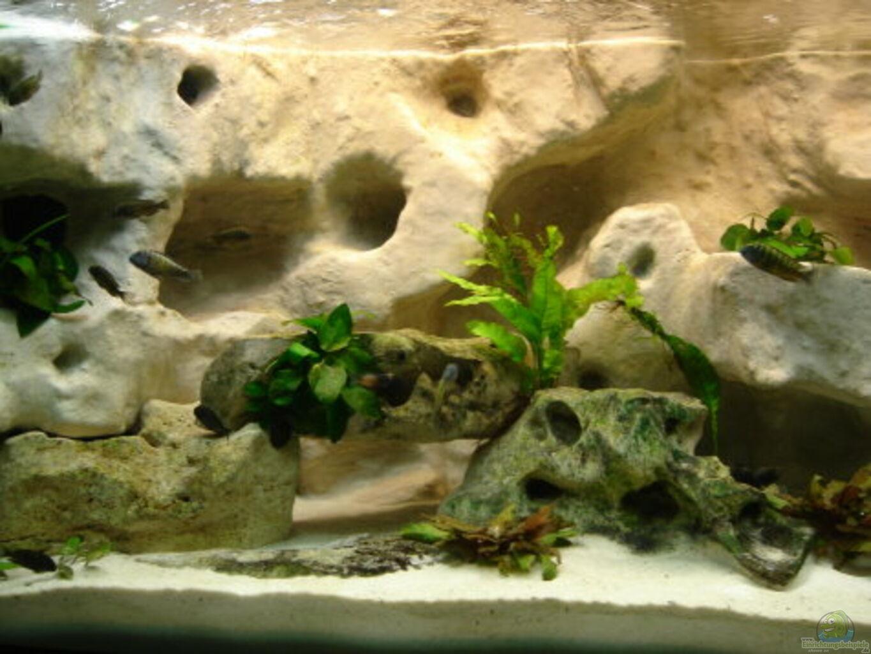 aquarium von enrico m ller becken 10874. Black Bedroom Furniture Sets. Home Design Ideas