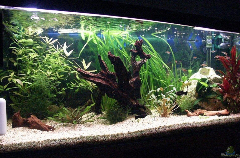 Aquarium von Sauerlandmicha  Becken 10969
