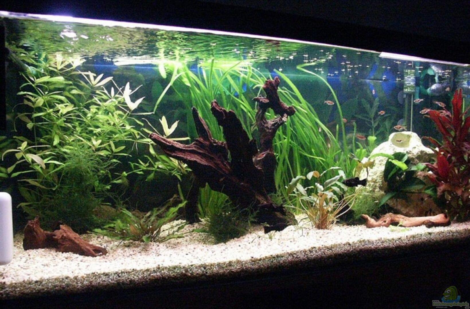 aquarium von sauerlandmicha becken 10969. Black Bedroom Furniture Sets. Home Design Ideas