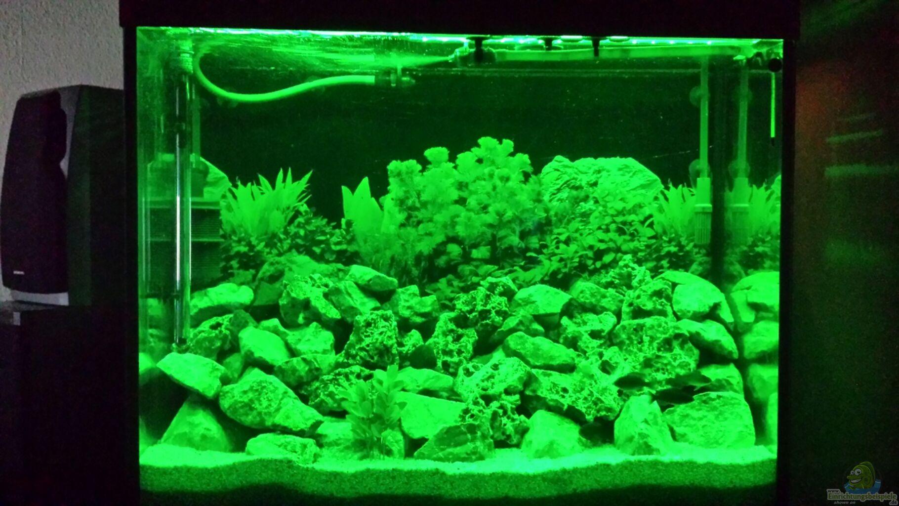 Aquarium filter luftheber bauanleitung aquarium meduza for Aquarium innenfilter
