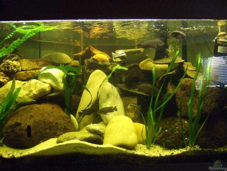aquarium von esslinger becken 11053. Black Bedroom Furniture Sets. Home Design Ideas