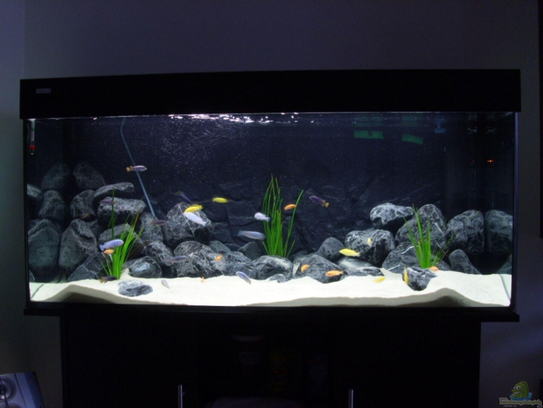 Aquarium von Tobias Blaurock: Becken 11079