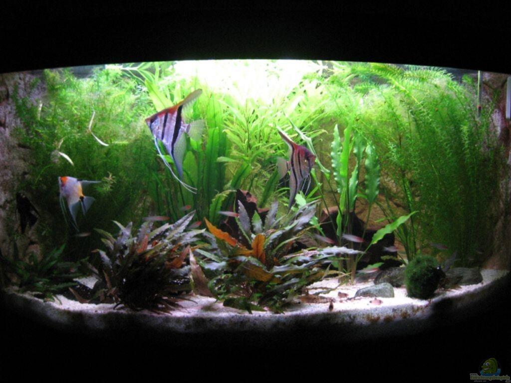 aquarium von marco mau becken 11117. Black Bedroom Furniture Sets. Home Design Ideas