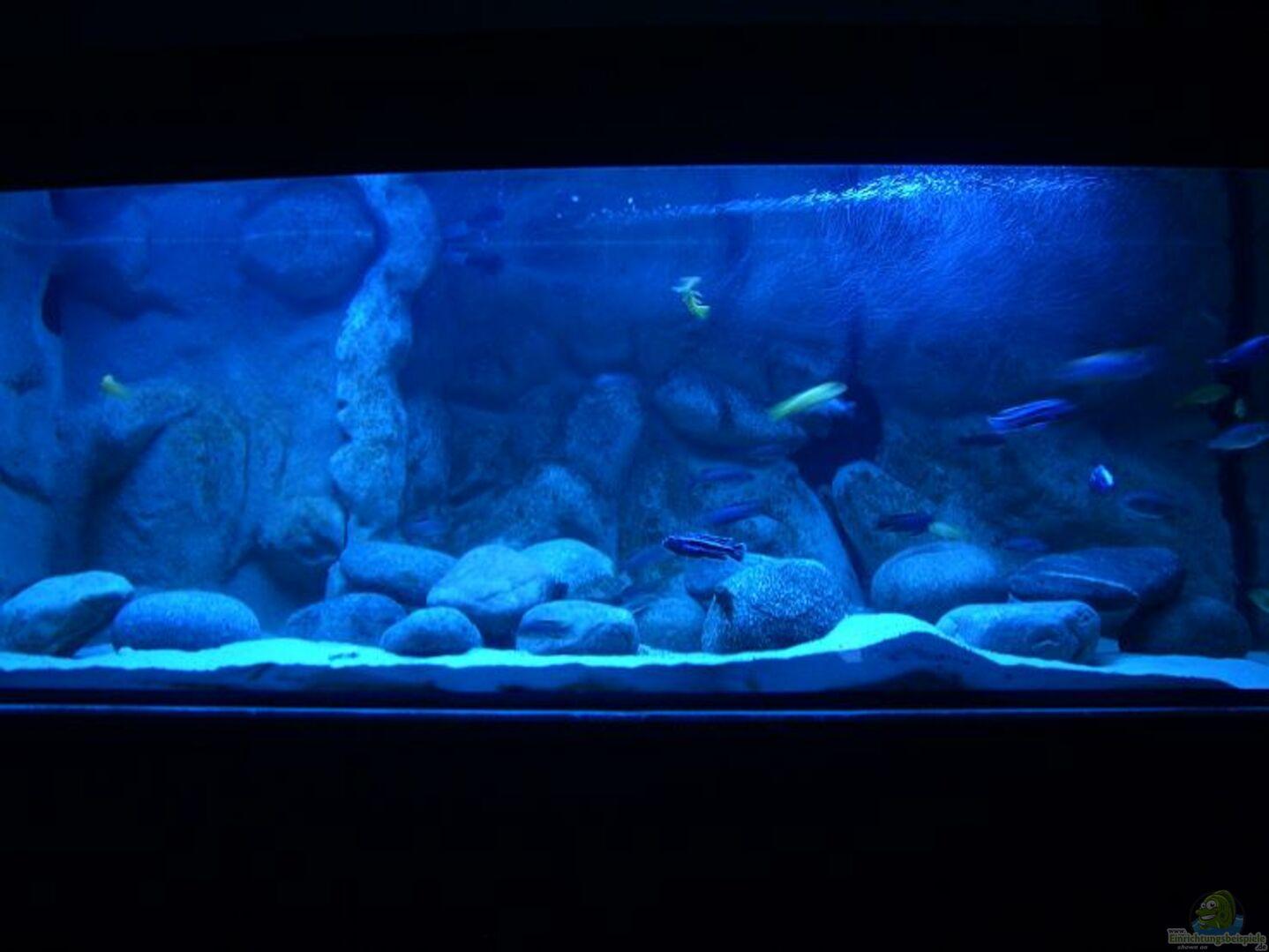 aquarium von republic of lake malawi becken 11118. Black Bedroom Furniture Sets. Home Design Ideas