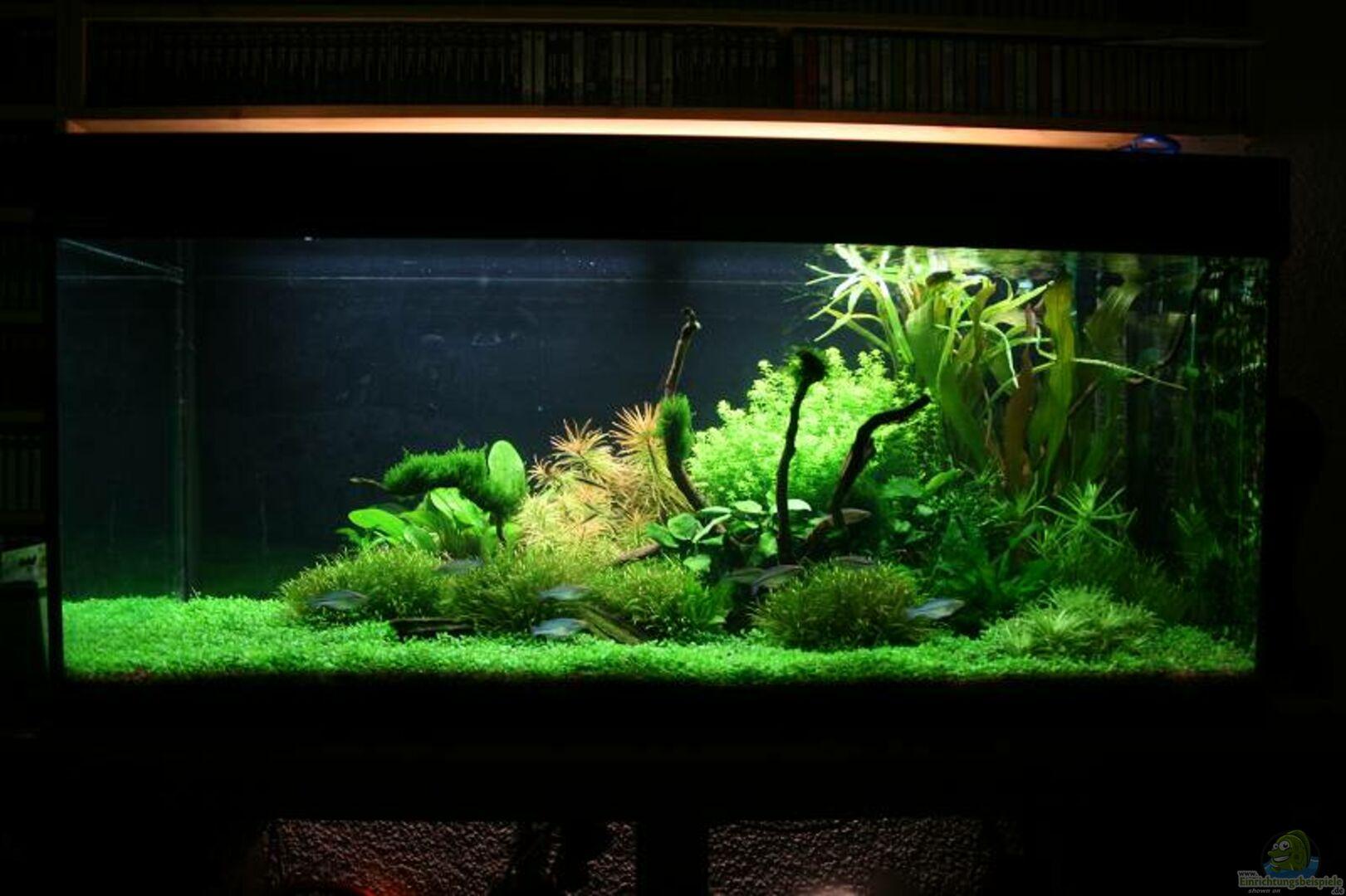 aquarium von tutti becken 11128. Black Bedroom Furniture Sets. Home Design Ideas