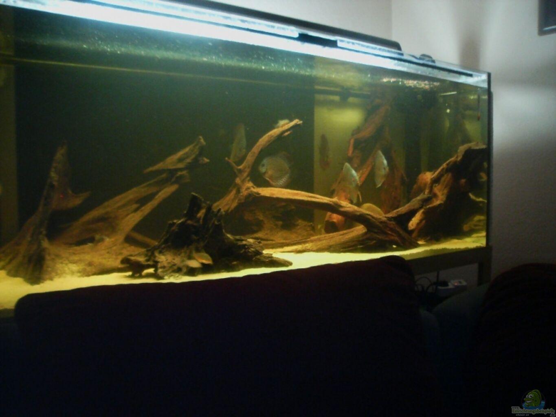 aquarium von stalker diskusbecken. Black Bedroom Furniture Sets. Home Design Ideas