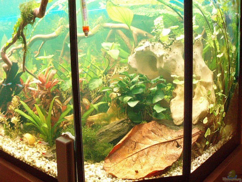 aquarium von jason becken 11189. Black Bedroom Furniture Sets. Home Design Ideas