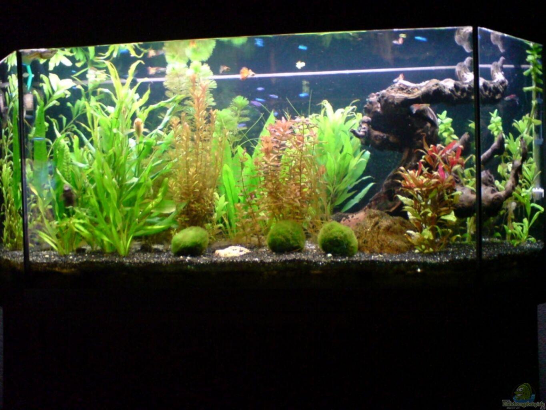 Aquarium von fransenlippler becken 11211 for Aquarium wasserwechsel