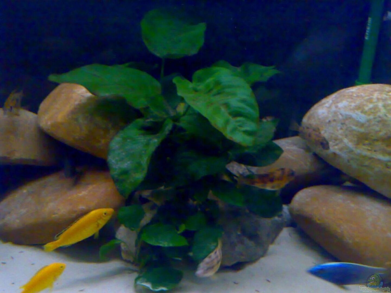 Aquarium von frank weber becken 11236 for Kieselsteine baumarkt