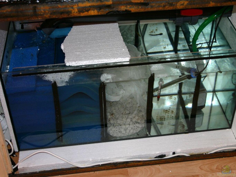 aquarium von rajko hamernick becken 1125. Black Bedroom Furniture Sets. Home Design Ideas