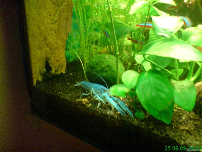 Aquarium von stifflersmom76 becken 11259 for Kampffisch becken