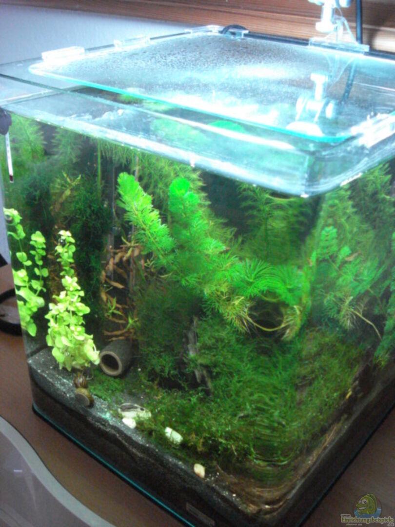 aquarium von andreas deutschmann becken 11276. Black Bedroom Furniture Sets. Home Design Ideas