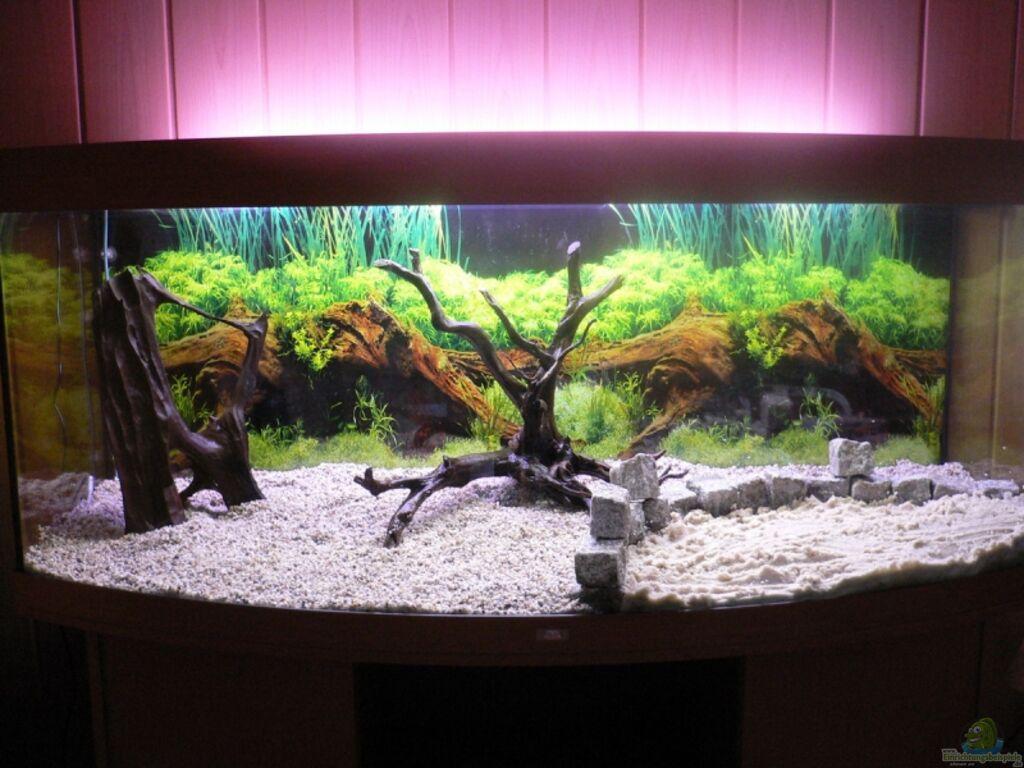 aquarium von steffen r bsam becken 11303. Black Bedroom Furniture Sets. Home Design Ideas
