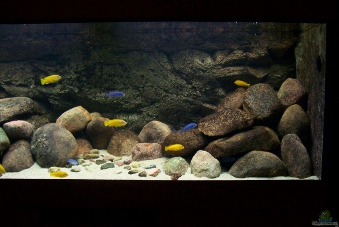aquarium von rene sarink becken 11355. Black Bedroom Furniture Sets. Home Design Ideas