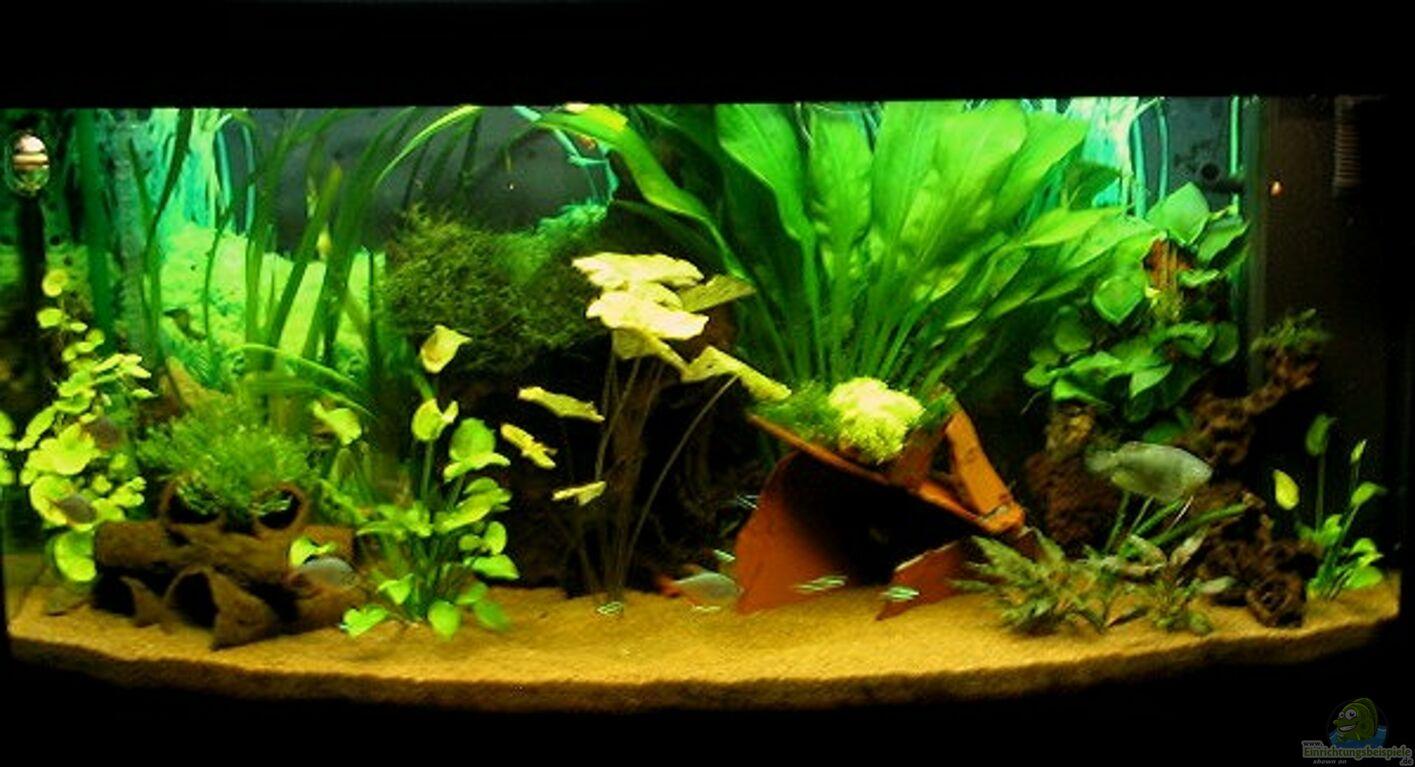 aquarium von sabine hoffmann becken 1137. Black Bedroom Furniture Sets. Home Design Ideas