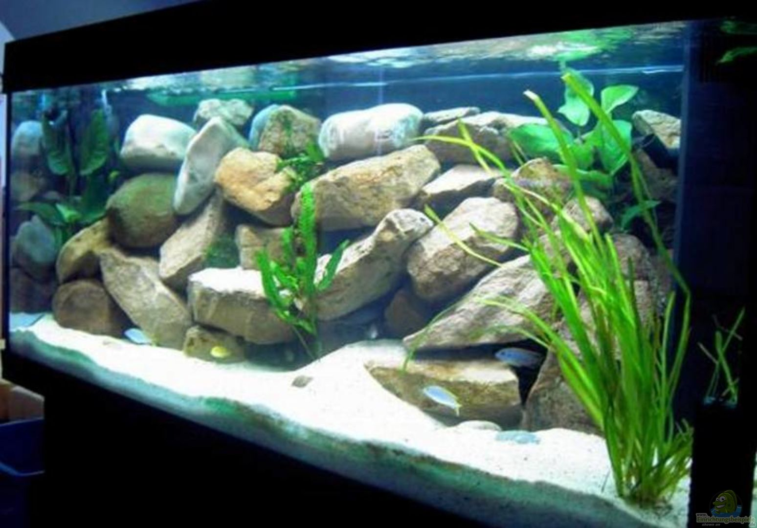 aquarium von sebastian hornberger becken 1143. Black Bedroom Furniture Sets. Home Design Ideas