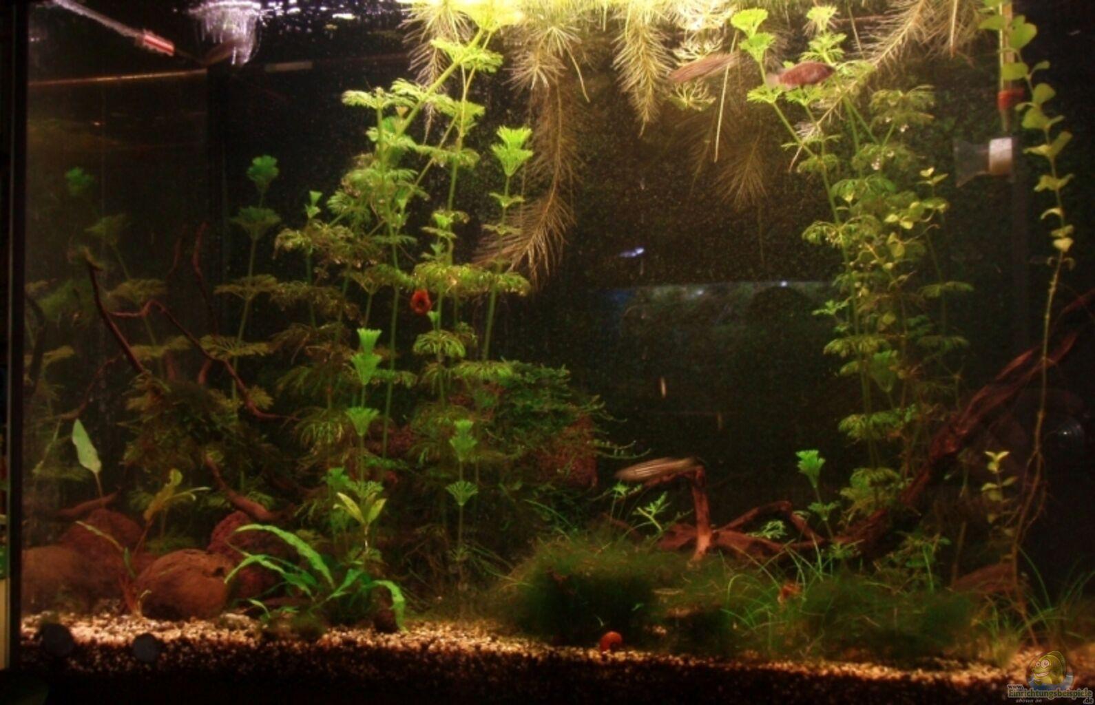 aquarium von aetti becken 11458. Black Bedroom Furniture Sets. Home Design Ideas