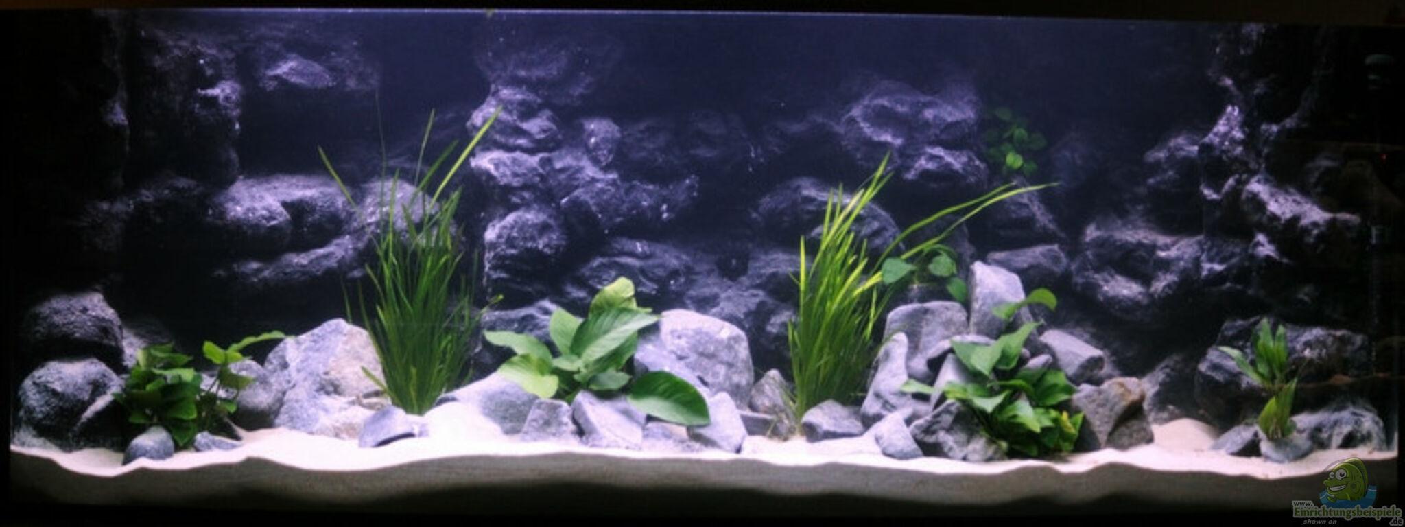 aquarium von luna unser malawi. Black Bedroom Furniture Sets. Home Design Ideas