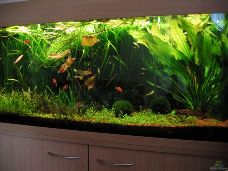 aquarium von matthias weber becken 1151. Black Bedroom Furniture Sets. Home Design Ideas