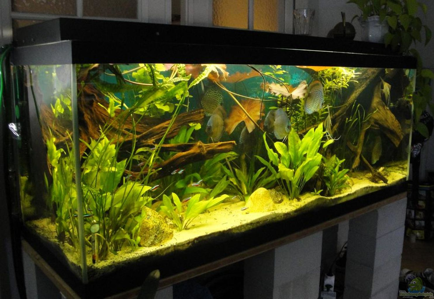 aquarium von laura amazonas existiert nicht mehr. Black Bedroom Furniture Sets. Home Design Ideas