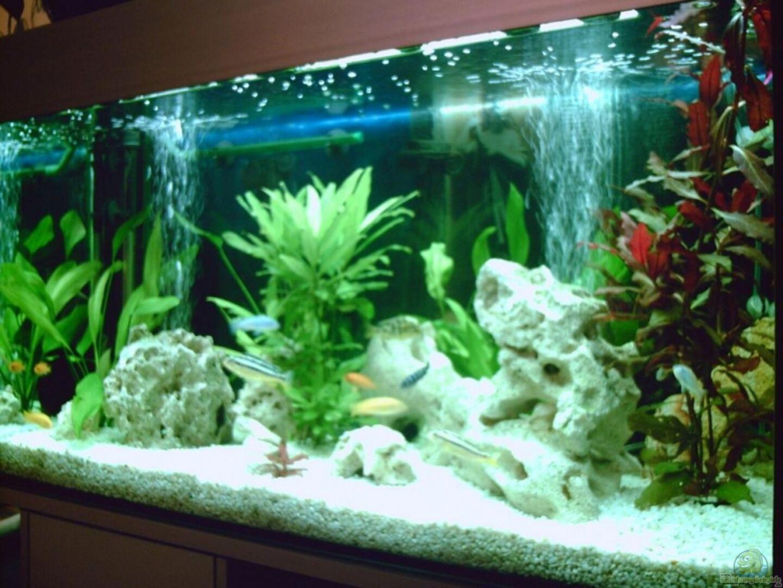 aquarium von ronald leuschner becken 11577. Black Bedroom Furniture Sets. Home Design Ideas